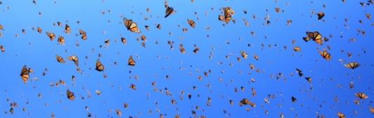 Cielo-de-monarcas630x2001